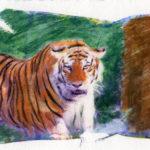 Hand colored c-print lift, tiger